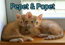 Popet & Pepet