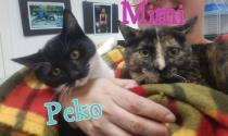 Peko & Mimí