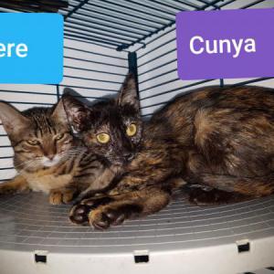 Pere & Cunya