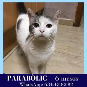Parabòlic